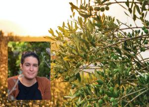 Un olivier et le portrait de la sommelière en huile d'olive Virginie Gallet